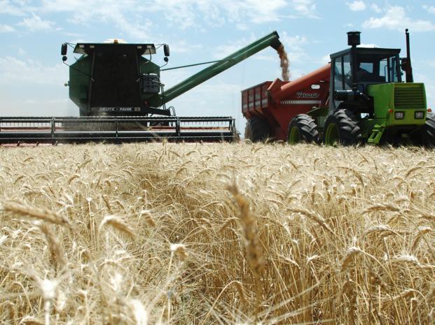 Más argumentos de la BCR vaticinan una pésima campaña de trigo