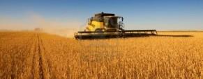 Más empresas agropecuarias se endeudan y liquidan capital