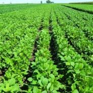 Los productores agropecuarios se quedaron sin 30 Mt de granos para vender; un duro golpe para ellos y para la economía argentina.