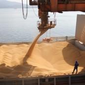 La compra de granos es un 23% menor que en 2013