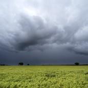 El clima es un factor para seguir en el mercado