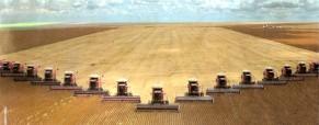 Entre la cosecha estadounidense y la siembra local