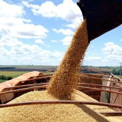 Para sumar reservas, reavivan plan de una empresa estatal de granos