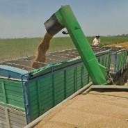 ¿En cuánto se calculan las pérdidas por sequía en maíz y soja?