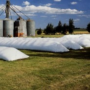 Fuerte crecimiento de la capacidad de almacenaje de granos