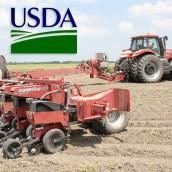 Sorpresa del USDA por menos soja y más maíz de lo esperado