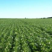 Se reactiva la venta de campos, luego del freno impuesto por la devaluación