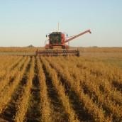 La cosecha argentina edulza al gobierno