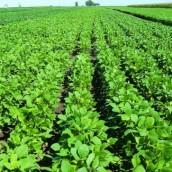La demanda sostiene a la soja en todos los mercados