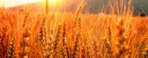 Argentina incrementó 143% sus ventas de trigo a Brasil durante el año pasado