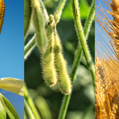 El Gobierno obliga al campo a registrar todas las ventas de granos