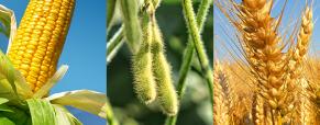 El gobierno anuncio reintegro de parte de las retenciones para pequeños productores