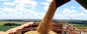 La necesidad hace vender la soja