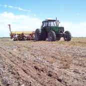 Por la baja de precios, la campaña agrícola deja quebrantos en campos alquilados